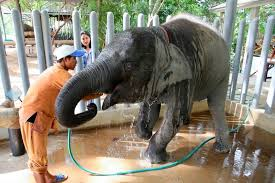 Friends of the asian elephant hospital