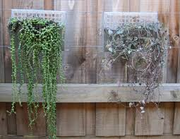 wall planters creating a vertical garden