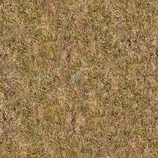 dirt grass texture seamless. Dry Grass Texture Seamless 12913 Dirt G