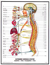 Chiropractic Body Chart Progressive Chiropractic How Chiropractic Works In Gilbert