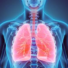 'i am your sister, and therefore you are the man in the world that i most love. Your Lungs Are Really Amazing An Anatomy Professor Explains Why