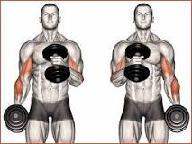 Image result for how to do hammer curls