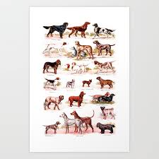 dog chart vintage dog breed chart art print by rorosi
