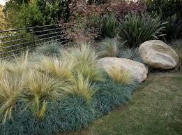 Small Picture Best 25 Landscape grasses ideas on Pinterest Drought tolerant