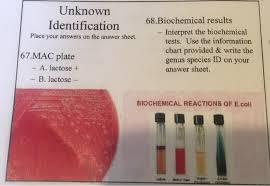 Biochemical Test Chart Identification Solved Unknown 68 Biochemical Results Identification Inte