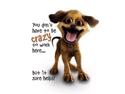 dog es wallpapers funny sayings crazy dog 1024x768 57518 funny sayings