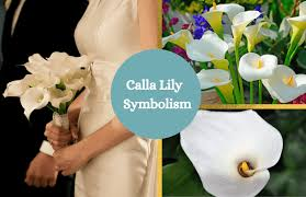 calla lily symbolism and meaning