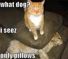 cats and dogs fighting quotes. Cats And Dogs Fighting Quotes Google Search Intended
