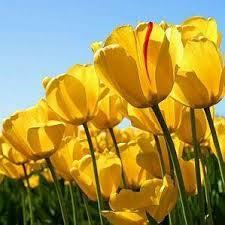 Quelle est la signification des fleurs jaunes - 4 étapes
