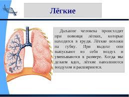 ПРЕЗЕНТАЦИЯ ПО ФИЗИЧЕСКОЙ КУЛЬТУРЕ НА ТЕМУ ТВОЙ ОРГАНИЗМ КЛАСС  слайда 11 Лёгкие Дыхание человека происходит при помощи лёгких которые находятся в гру