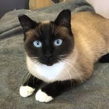 Quagga Stray Cat Rescue - Home | Facebook