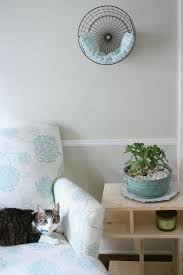 both cats love to be up high and bella loves to be curled up in small spaces so i decided a wall bed might be the perfect idea for them