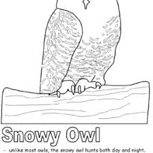 Small Picture Coloring Page Snowy Owl Kids Drawing And Coloring Pages Marisa