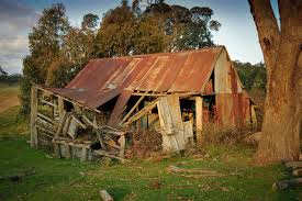 ryannah shearing shed