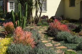 drought tolerant garden. Drought Tolerant Landscape Landscaping Los Angeles Garden Of Eva