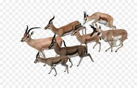 antelope zoo ty 2 springbok giraffe impala giraffe