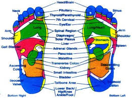 Free Acupuncture Point Diagram Applied Kinesiology Charts