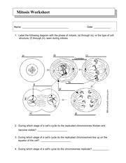 mitosis_worksheet - chromosomes 2 sister chromatids shorten(iii ...