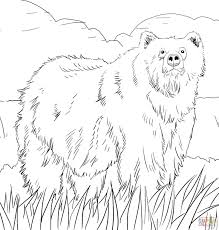 Small Picture Grizzly bears coloring pages Free Coloring Pages