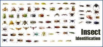 Bug Id Chart 43 Expository Insect Identification Chart