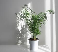11 dog friendly shrubs best plants to
