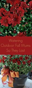 Outdoor Decorating For Fall Best 25 Fall Mums Ideas On Pinterest Autumn Decorations