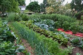 Kitchen Garden Companion Best Garden Vegetables Tips For A Raised Bed Vegetable Garden
