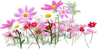 flower garden cut flowers clip art small flower 1000 504 png
