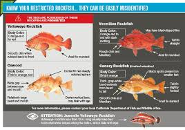California Rockfish Chart In Season Groundfish Changes California Saltwater Fishing