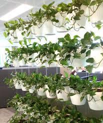 indoor hanging planters wall