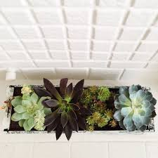 Diy Window Boxes How To Make A Diy Window Box Garden For Succulents