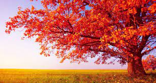 47+ Beautiful Tree HD Wallpapers, For ...