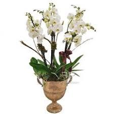 <b>Plant</b> Delivery Milan | <b>Luxury</b> Florist | Phalenopsis Orchids