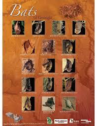 Types Of Bats Chart Bats Of Georgia