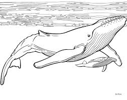 Small Picture 13 best whales images on Pinterest Drawings Humpback whale and