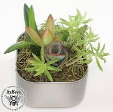 Office cubicle plants Worker Mini Live Succulent Garden Magnet 2 Tictail Mini Live Succulent Garden Magnet 2