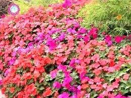 outdoor faux flowers artificial hanging baskets flowering plants garden best perennial border images on peren