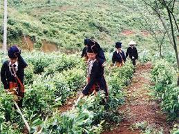 Kết quả hình ảnh cho lao động miền núi