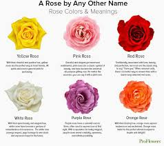 Pink Rose Color Chart Rose Color Chart Meanings Yellow Rose Meaning Rose Color