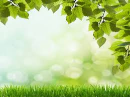 beautiful background pictures for powerpoint. Exellent Powerpoint Beautiful Green Grass PowerPoint Background Available In 960x720 This  Template Is Free To Download And Ready Use Intended Background Pictures For Powerpoint T