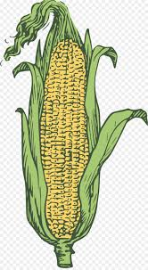 ear of corn clipart. Contemporary Corn Candy Corn Corn On The Cob Popcorn Maize Ear  Of Clipart For