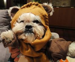 ewok dog costume shih tzu google search diy ideas and