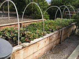 Small Picture Building a Raised Vegetable Garden Design Ideas Home Design Ideas