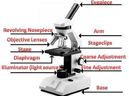 Parts Of The Microscope Parts Of A Microscope Important Things To Remember About Using The