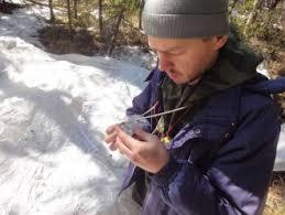 В Красноярском крае завершено контрольное обследование  По результатам проведенного обследования установлено что популяция благополучно перезимовала гибель гусениц в подстилке оказалась не значительной