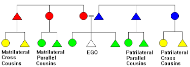 Family Relationship Chart Marriage Cross Cousin Marriage