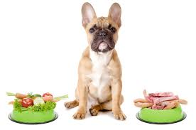 Top 5 Best Pet Foods For Diabetic Canines