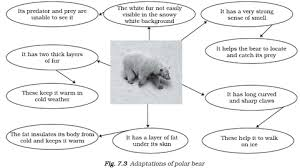 similiar polar bear diagram keywords polar bear teeth diagram polar image about wiring diagram into