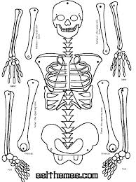 Small Picture The 25 best Human skeleton labeled ideas on Pinterest Human