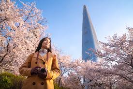 Asian <b>lady travel</b> and warking in cherry blossom park | <b>Premium</b> Photo
